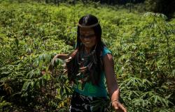 Cunhaporanga walks amid the crop on a cassava plantation.png